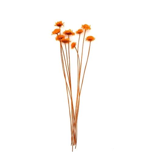 マーガレット ドライ Small Pack/820-オレンジ