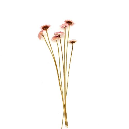 マーガレット ドライ Small Pack/860-ピンク