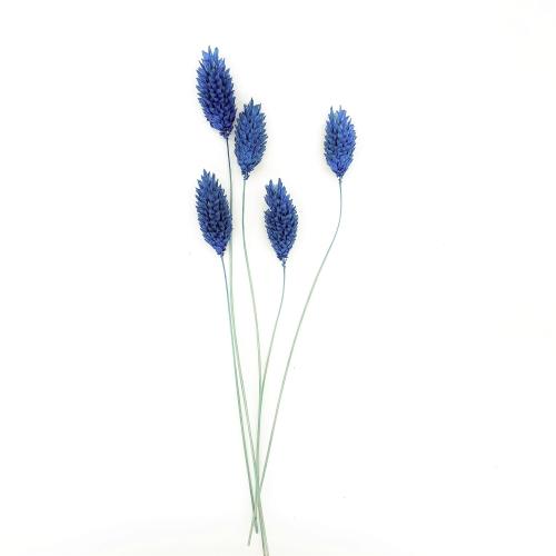 ファラリス ドライ Small Pack/870-ブルー