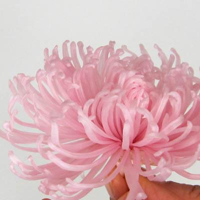 アナスタシアの花びらの補強