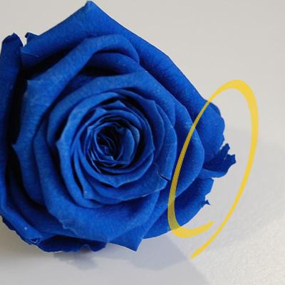 【花材の補修】 バラの花びらが欠けてしまった時の修理方法